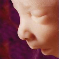 Результаты исследования показали, что ребенок умеет зевать уже в утробе матери