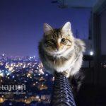 Что предпринять, если кот метит территорию