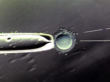 Успешное течение беременности зависит от контакта со спермой отца