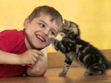 Появление ребенка в доме потребует от любителей животных изменений в жизни