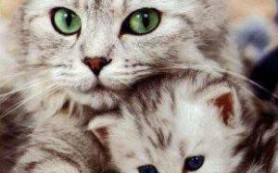 Беременность и кошки: чего стоит бояться