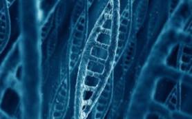 Ученые обнаружили один единственный ген, который вызывает половину всех раковых заболеваний