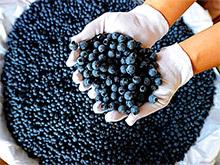 Голубика и некоторые фрукты снижают риск развития диабета 2 типа