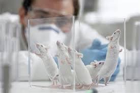 Ученые: химиотерапия может мешать иммунитету бороться с раком