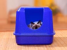 Кошачьи экскременты скрывают в себе лекарство от рака