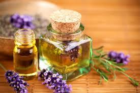 Лавандовое масло: применение и свойства
