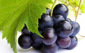 5 причин съесть виноград: мнение диетолога
