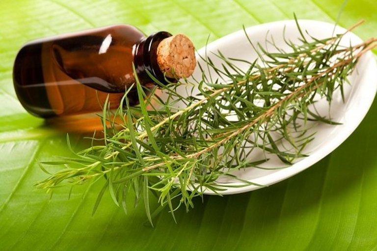Лечение маслом чайного дерева