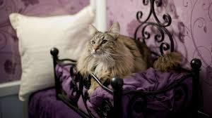 Пушистые кошки в зоогостиницах Москвы