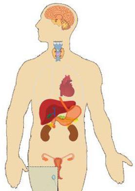 Что такое инсулин и какова его роль в организме?