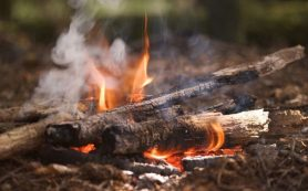 Древесный дым от костров вредит иммунитету