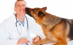 Помощь нашим любимцам — что такое ветеринария и какие болезни могут быть у наших любимцев