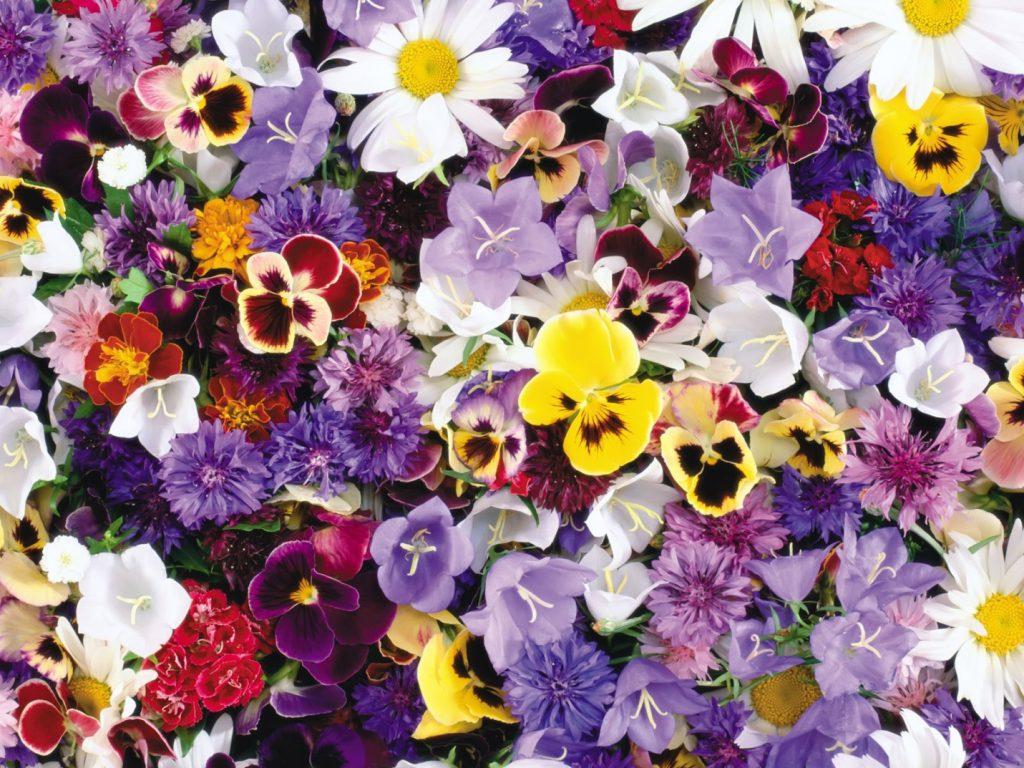 Цветы по месяцам