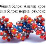 Норма общего белка у мужчин – показатель здоровья