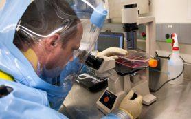 Ученые создали недорогой и действенный наногель против вирусов