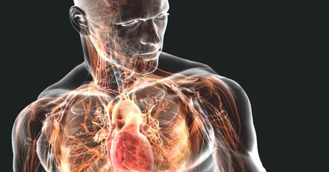 От органов эндокринной системы зависит «работа» всего организма