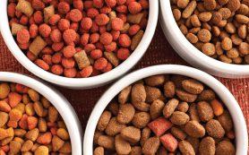 Как правильно выбирать корма для кошек?