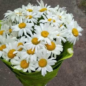 Букет ромашек — особенности цветов