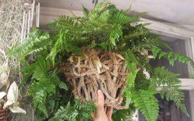 Цистит: устранение проблемы с помощью трав и травяных сборов