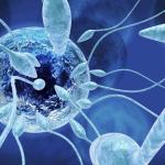 Астенотератозооспермия: что это за диагноз