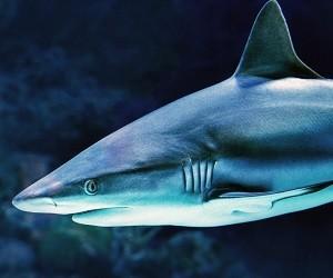 Чтобы сохранить здоровье, будьте как акула