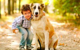 Как совместить дома маленького ребенка и большую собаку