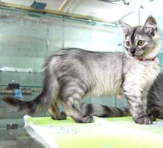 Сколько стоит передержка кошки?