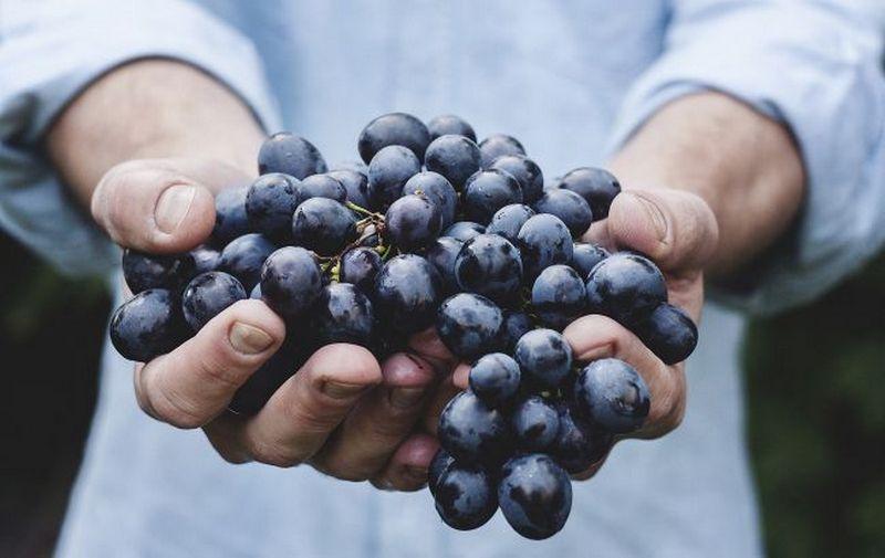Названы самые полезные фрукты и ягоды августа