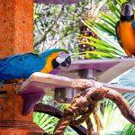 Выбор корма для попугаев
